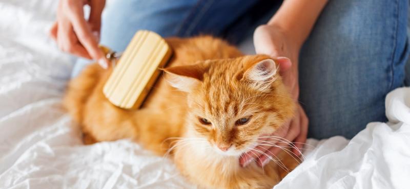 Вредно ли, что кошки едят свою шерсть?